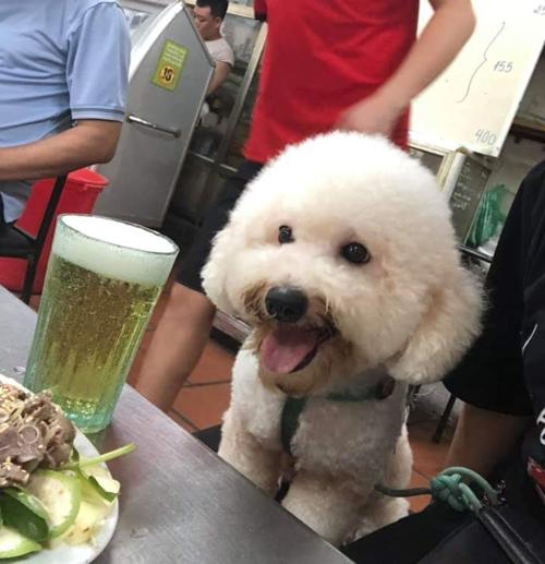 Chú chó đáng yêu trước khi được cắt tỉa lông.